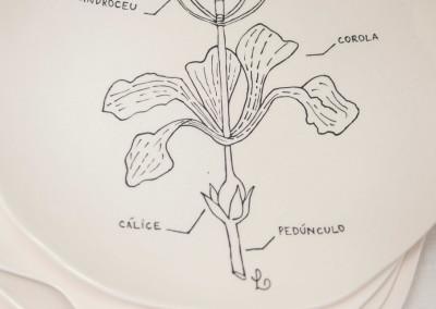 Desenhos Botanica20